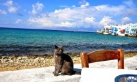 Curl up with a cat by the Sea